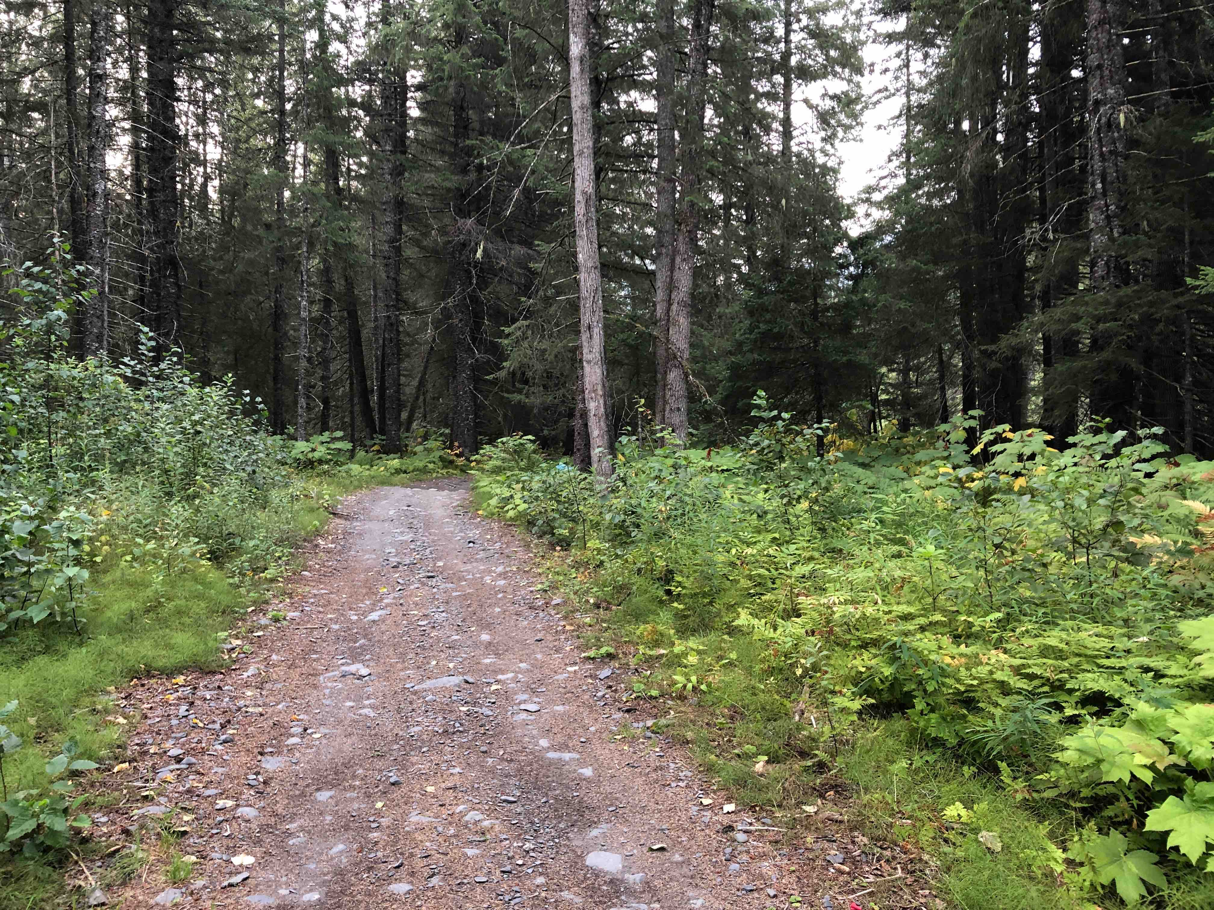 Good Guide-Alaska Deborah Johnson